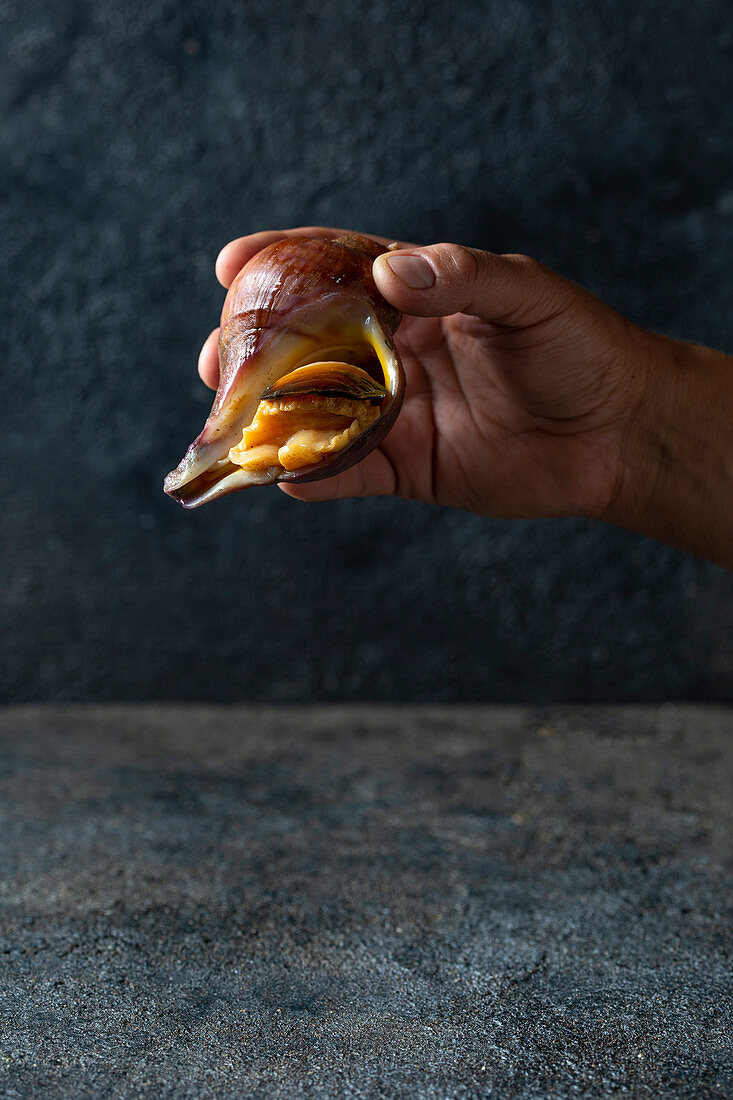 Men holding a big edible snail