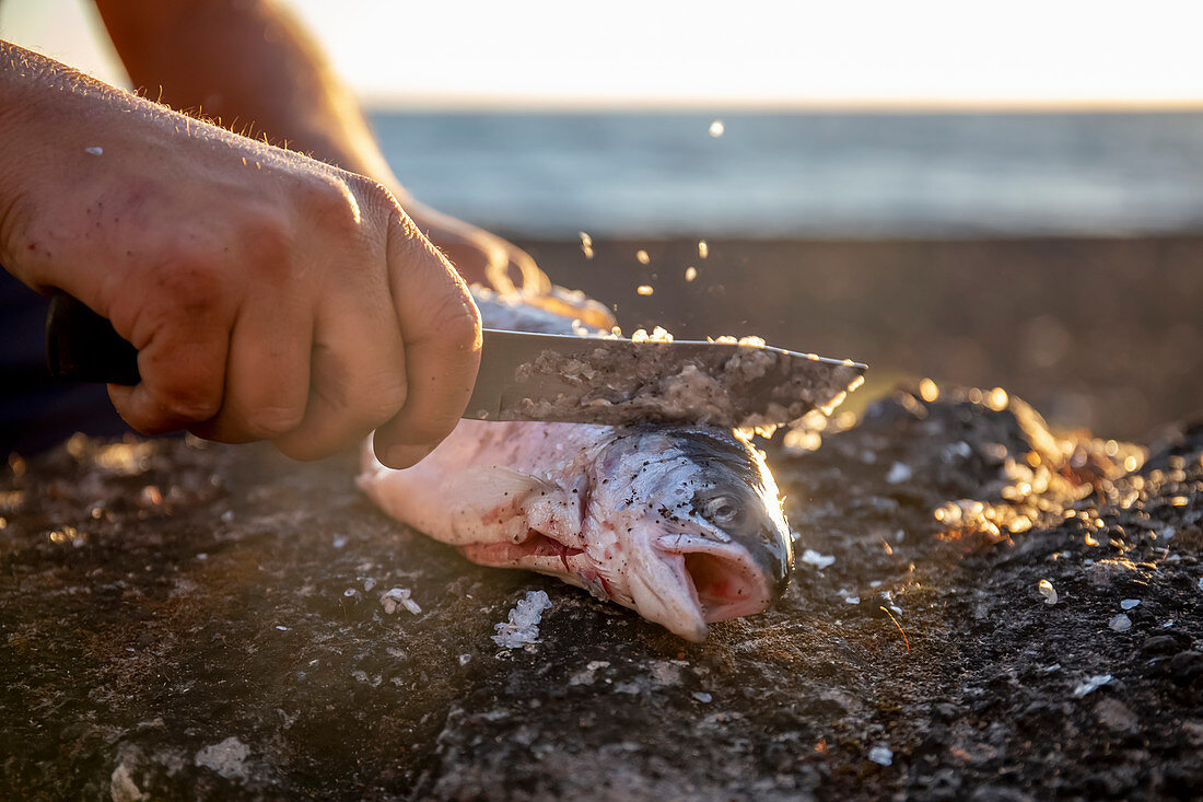 A man descaling a freshly caught salmon by the sea