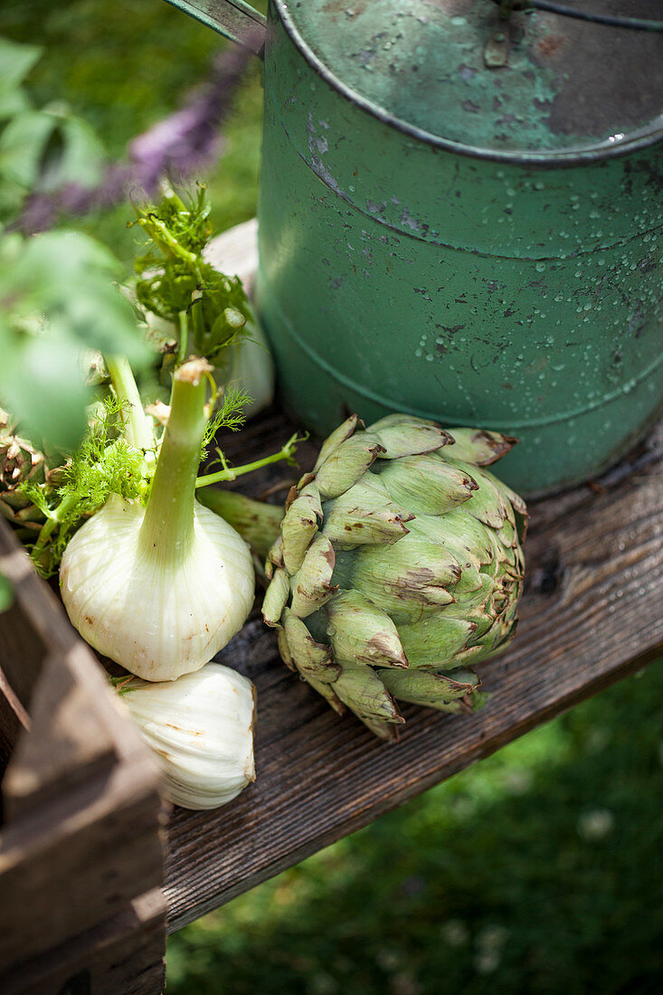 Fennel and artichoke, high angle view
