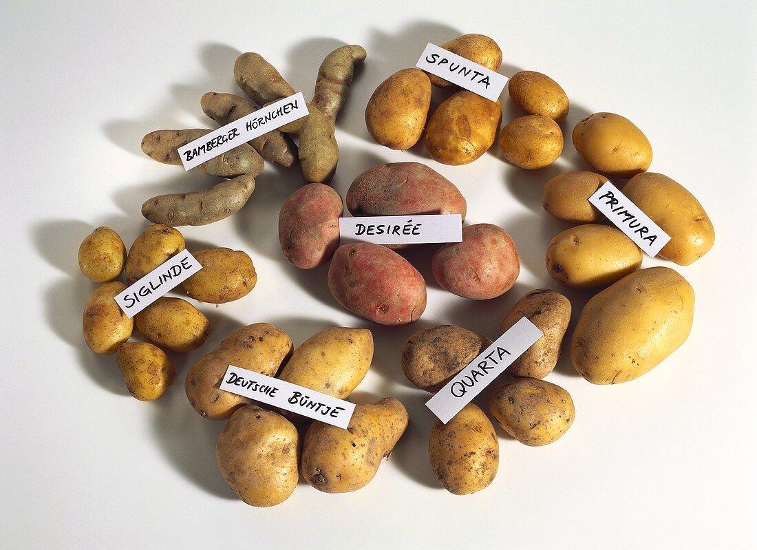 Mixed Types of Potatoes