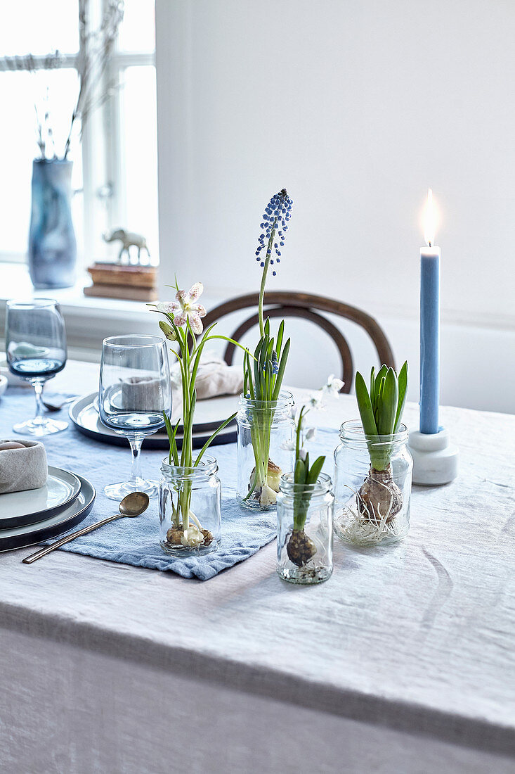 Flowering bulbs in glass jars on table set for spring in natural style