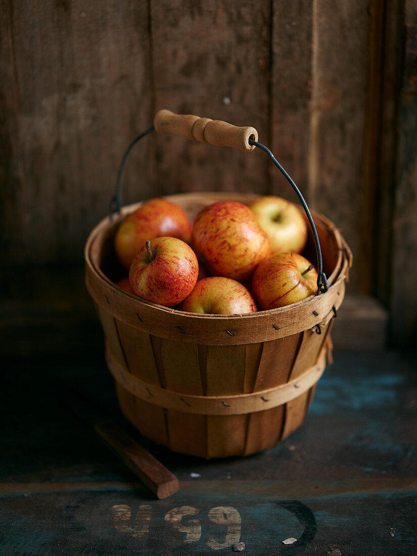 Fresh apples in a bucket