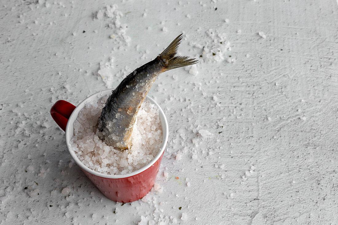 Sardine steckt in einer Tasse mit Meersalz