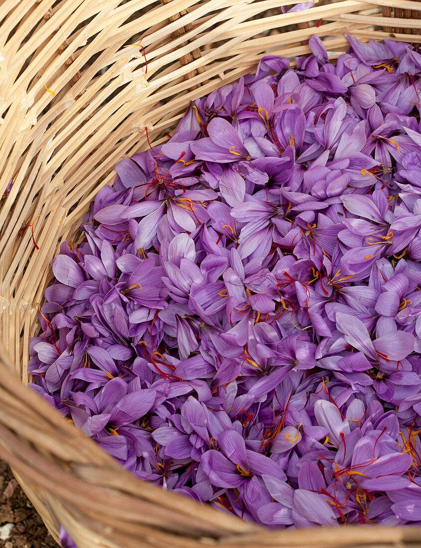 Greek saffron in wooden basket