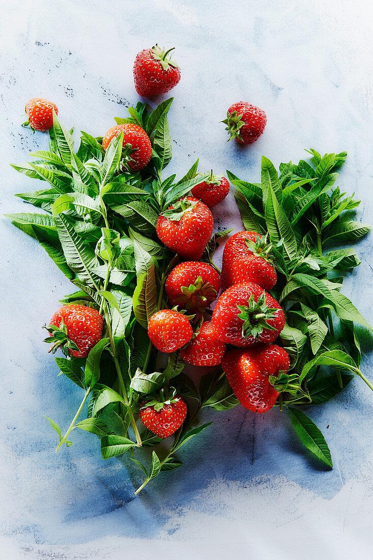 Strawberries and fresh mint