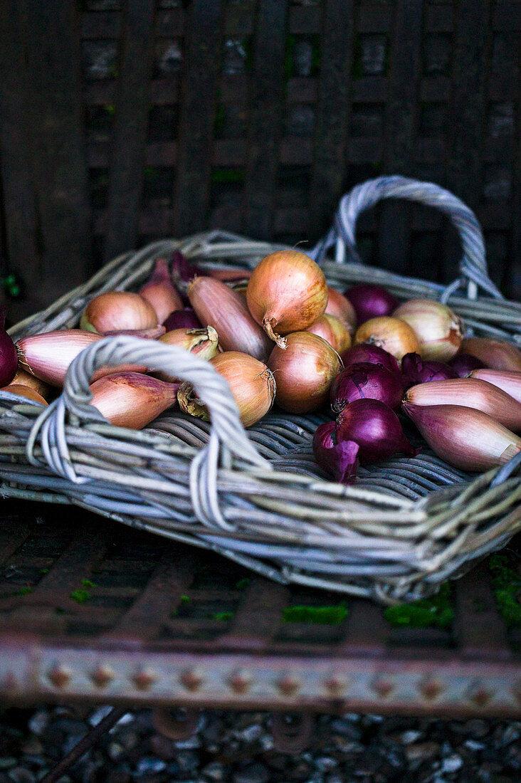 Wicker tray of onions
