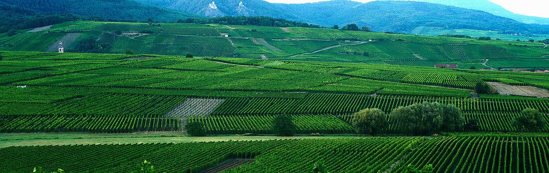 Green countryside in wine-growing region in Alsace (France)