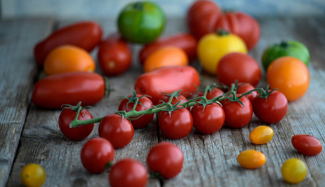 Tomatoes in different shapes and colors