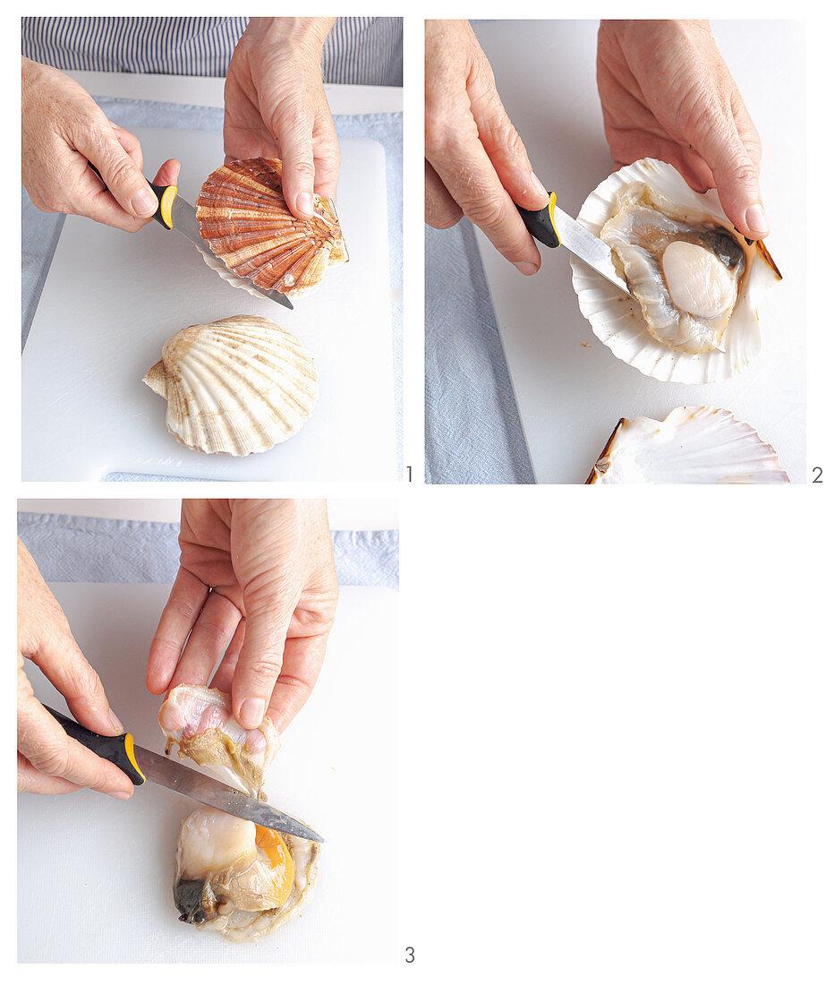 How to prepare scallops