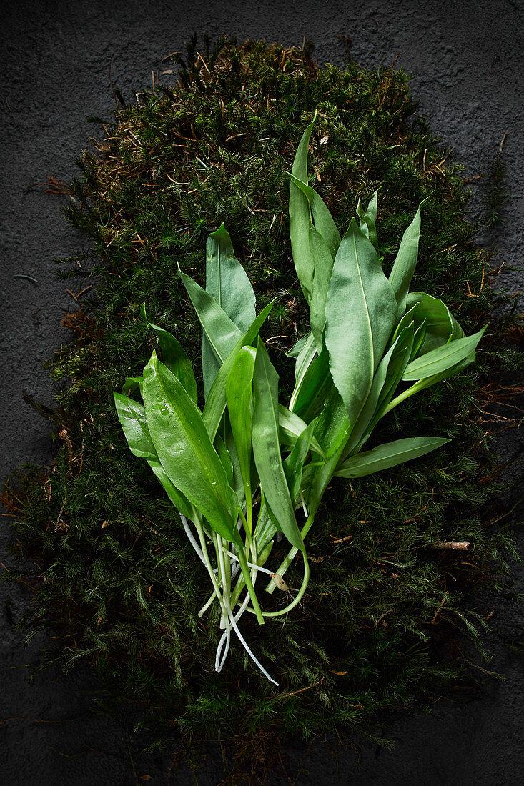 Fresh wild garlic on moss