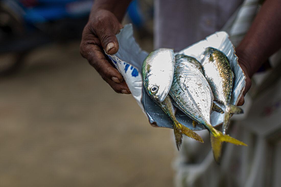 Fresh fish in Kerala, India