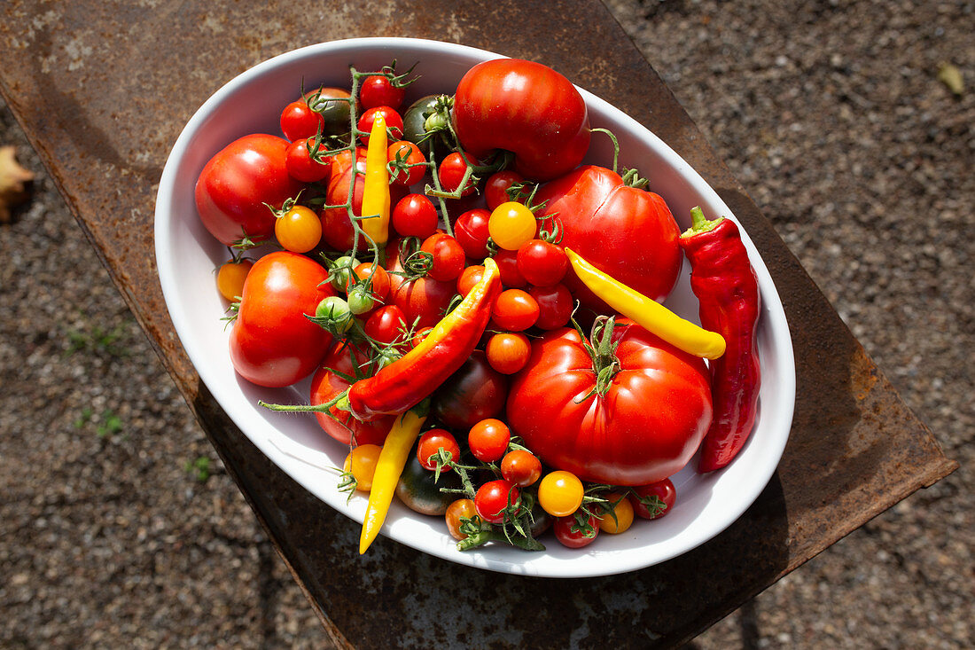 A selection of garden tomatoes