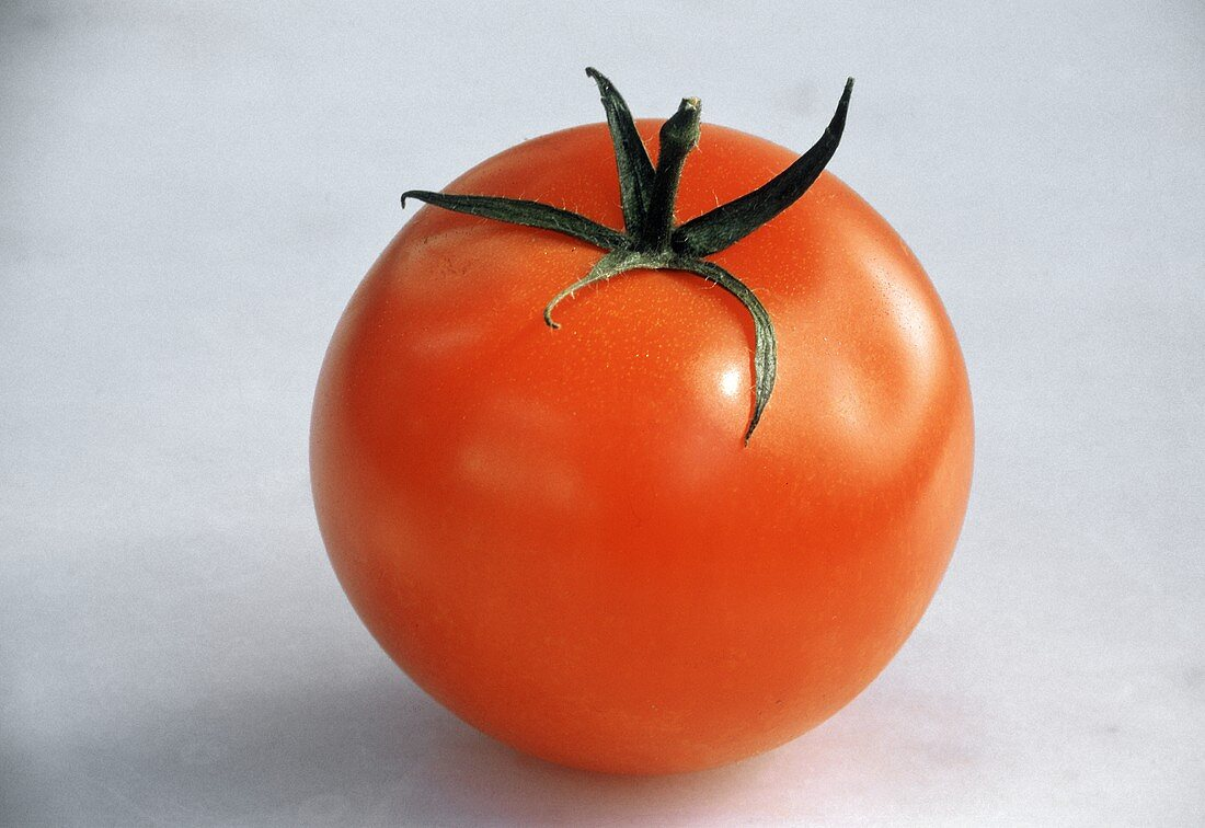 One Ripe Red Tomato
