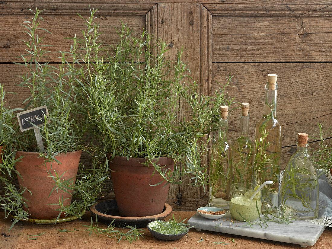 An arrangement of fresh tarragon, tarragon oil and tarragon sauce
