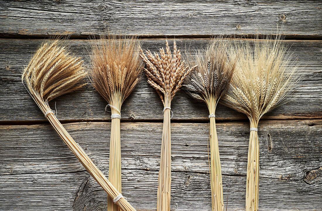 Various ears of wheat (einkorn, spelt, emmer and black emmer)