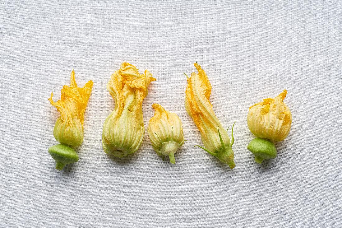 Fresh raw zucchini flowers on white linen background