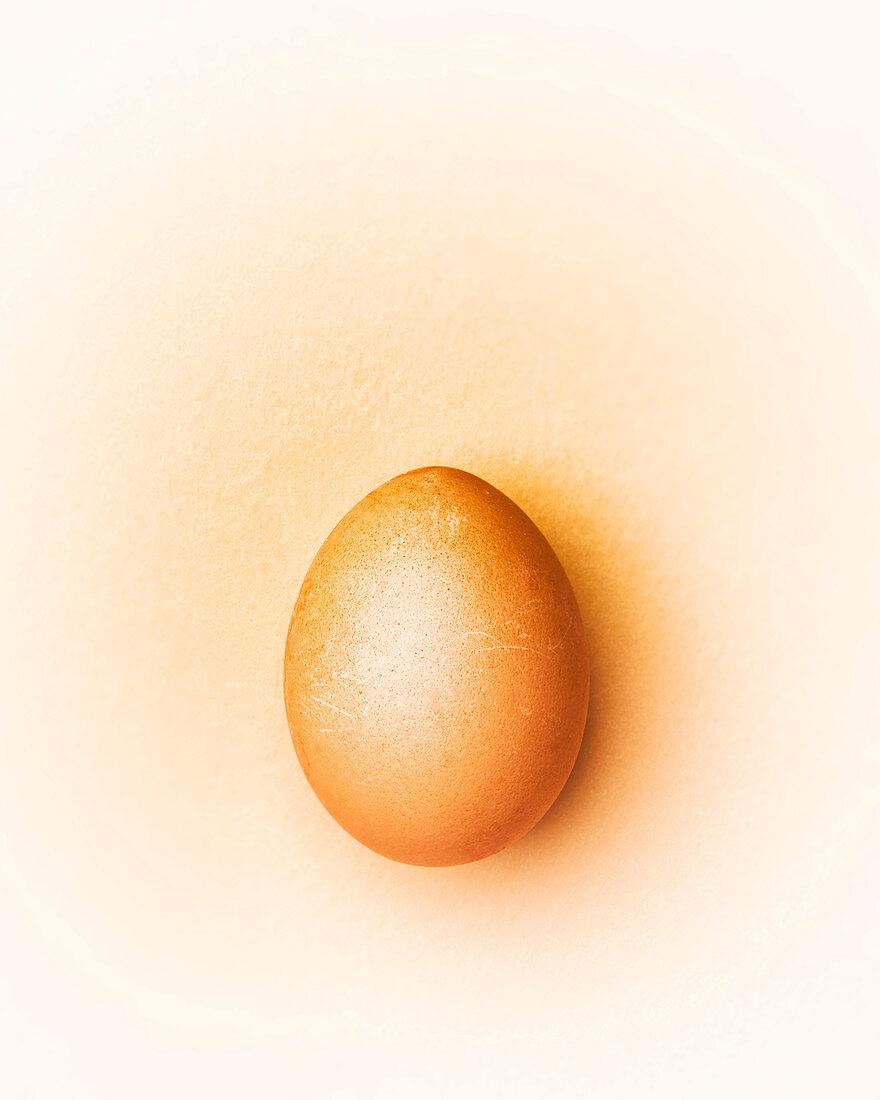 Brown chicken egg on a beige background