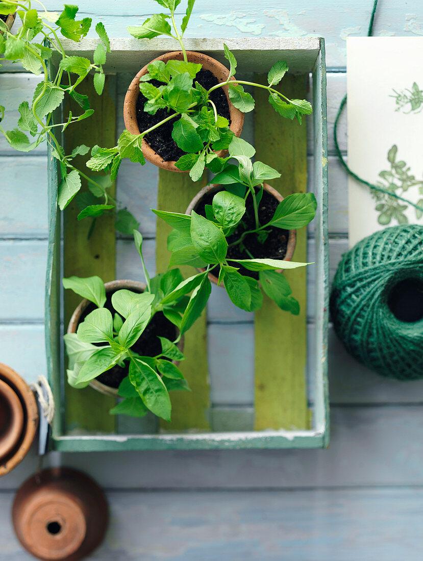 Edible herb garden at home