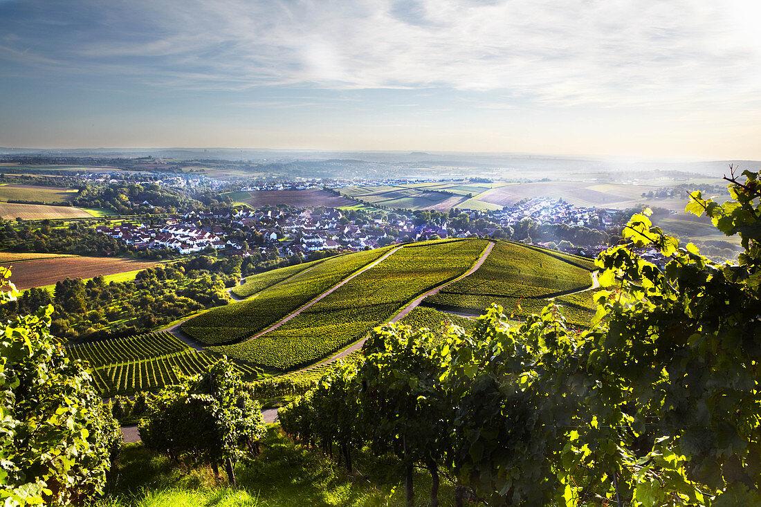 A vineyard landscape, Graf Adelmann vineyard, Württemberg, Germany