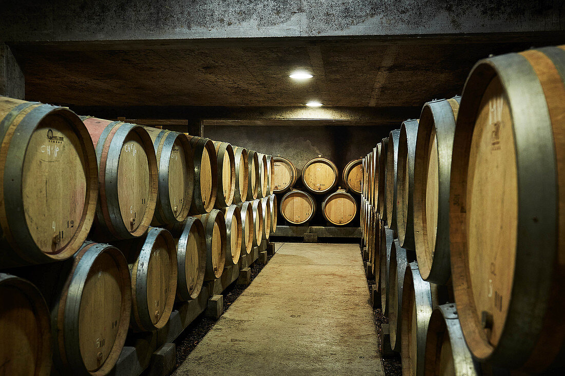 Barrique cellar, Domaine Dujac, Burgundy, France