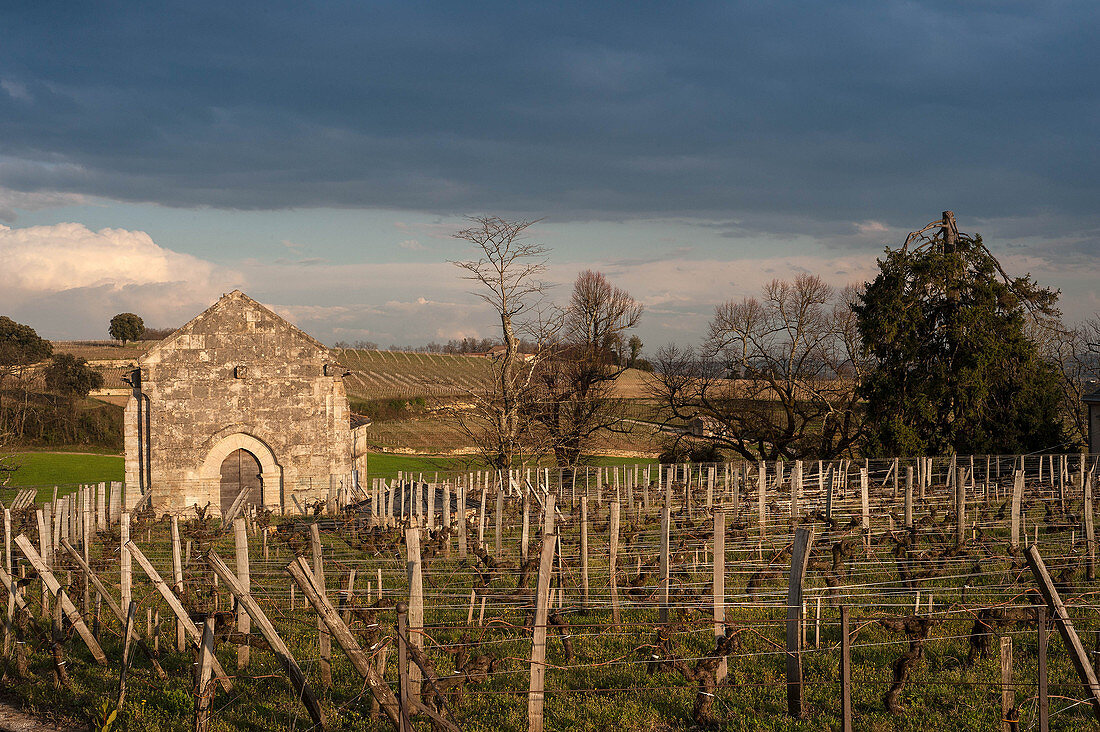 Vineyard landscape, Chateau Ausone, Saint-Emilion, Bordeaux, France