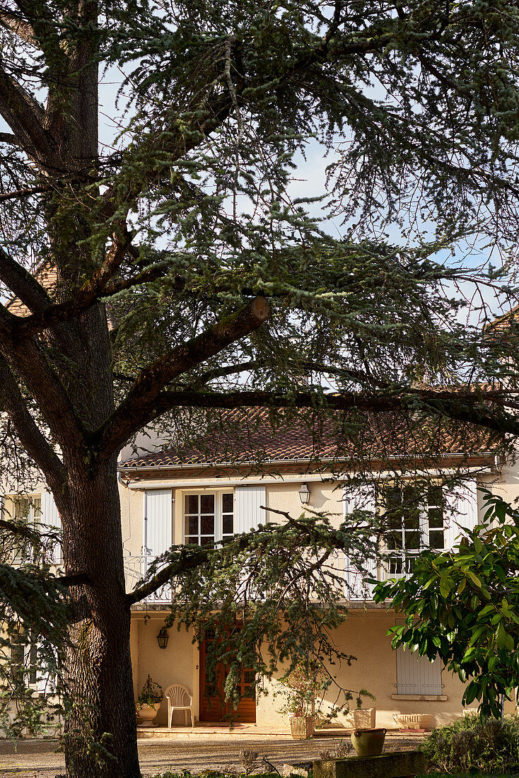 Tree in front of main building, Chateau du Cedre, Cahors, France