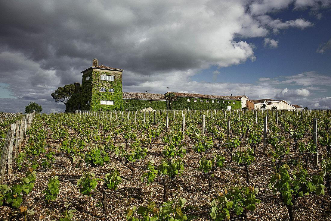 Main building and vines, Chateau Rieussec, Sauternes, Bordeaux, France