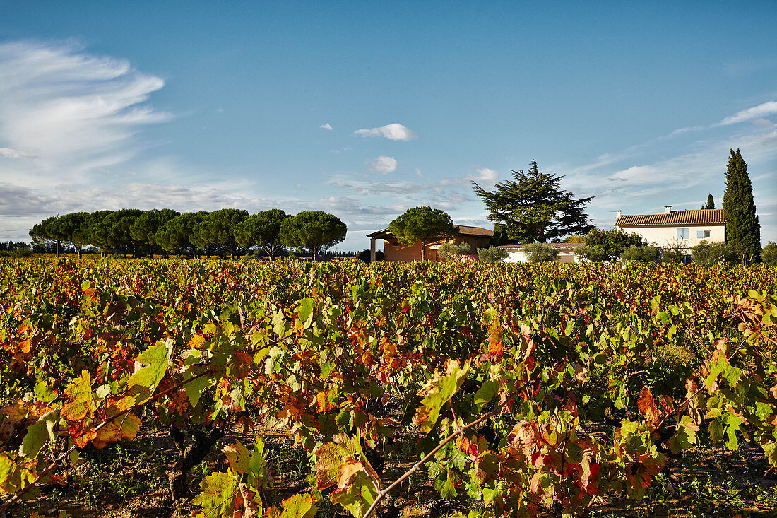 Vineyard landscape, Domaine Perrieres Kreydenweiss, Rhone, France