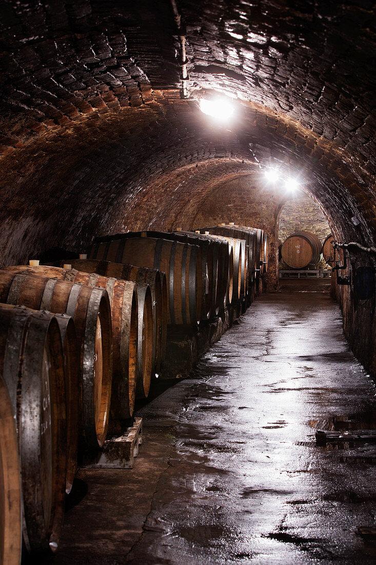 Barrel cellar, Ebner-Ebenauer vineyard, wine quarter, Austria