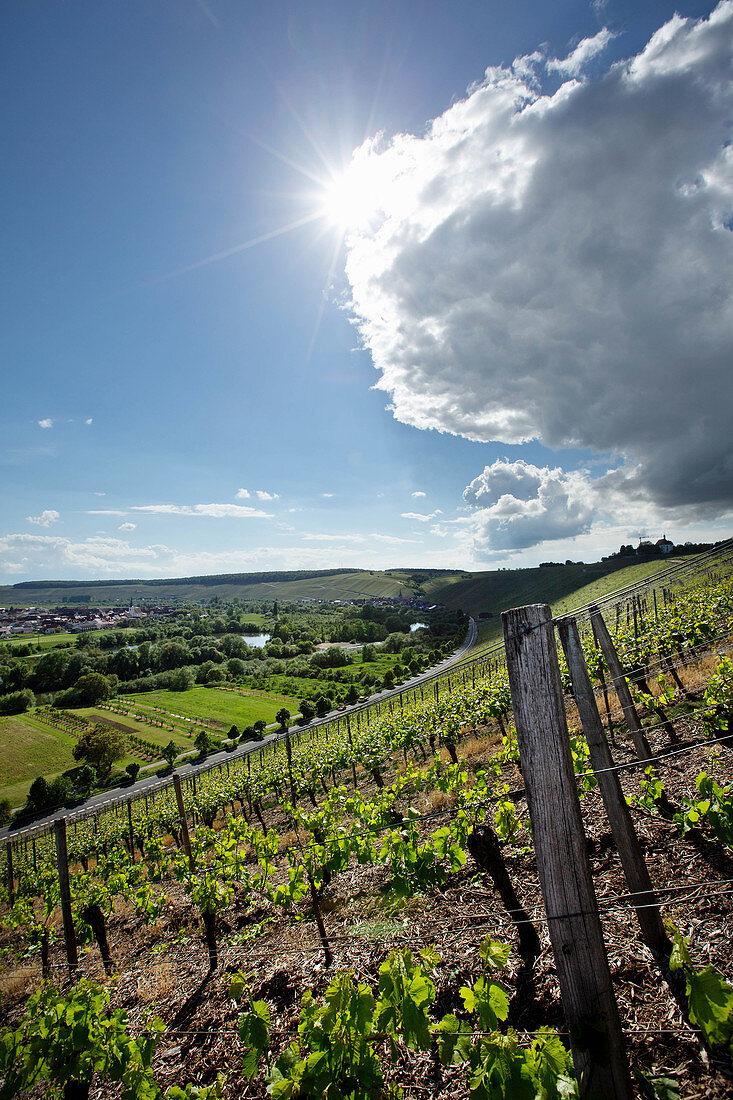 Vineyard landscape, Horst Sauer vineyard, Franconia, Germany