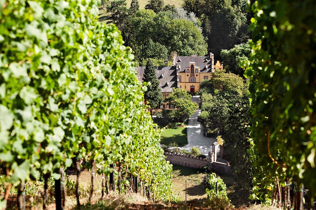 Maxim Grünhaus vineyard, Mosel, Germany
