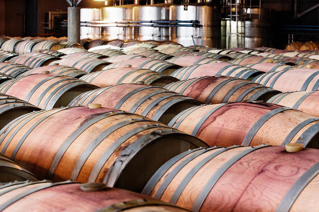 Barrique cellar, Nederburg vineyard, South Africa