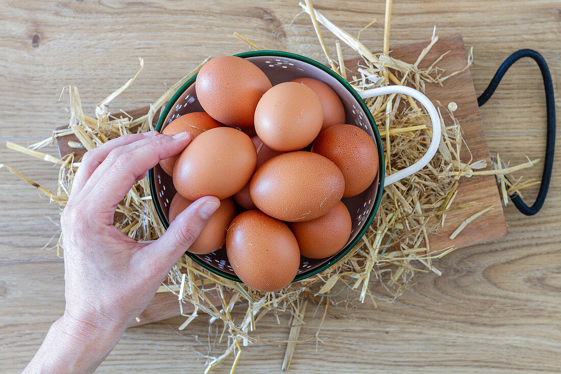 Hand takes brown chicken eggs from white colander on straw