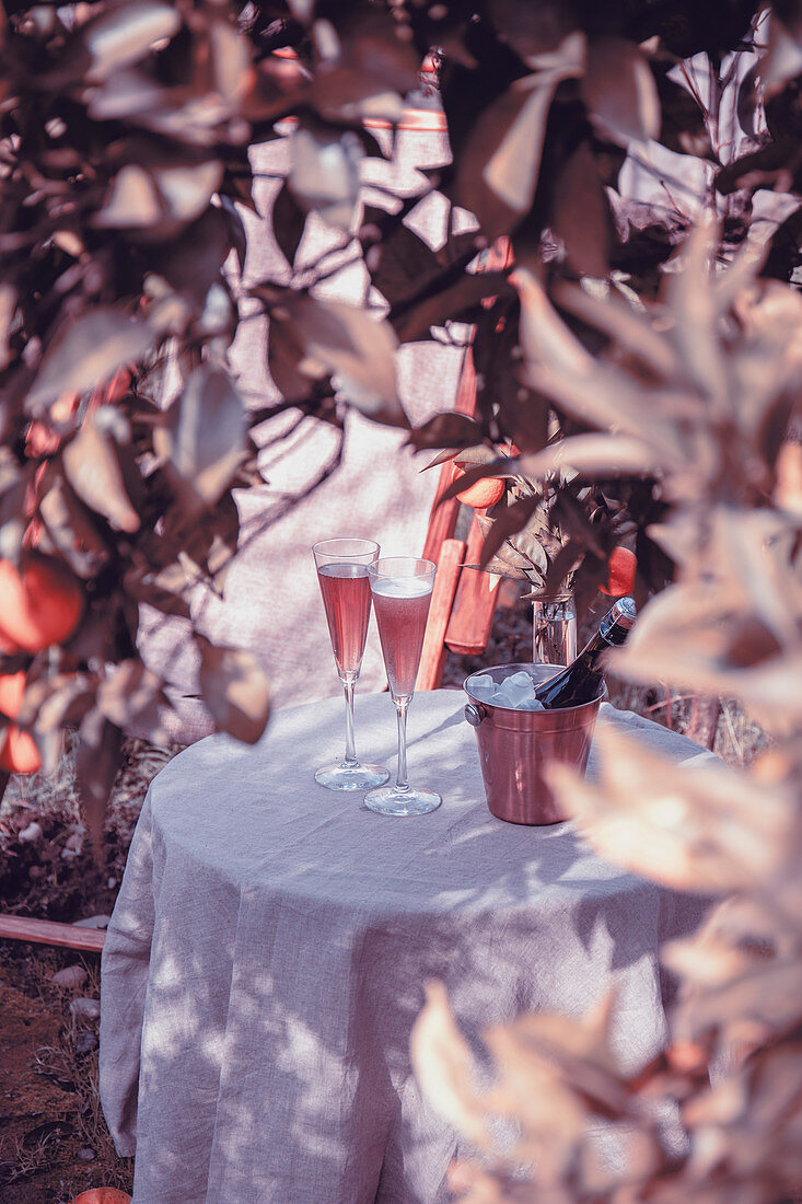Table in the garden near the orange tree with two glasses of sparkling rose champagne