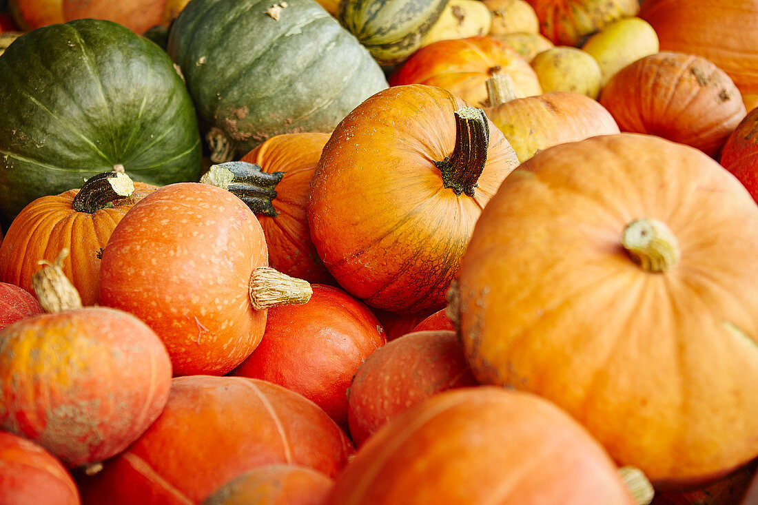 Composition of pumpkins on the table
