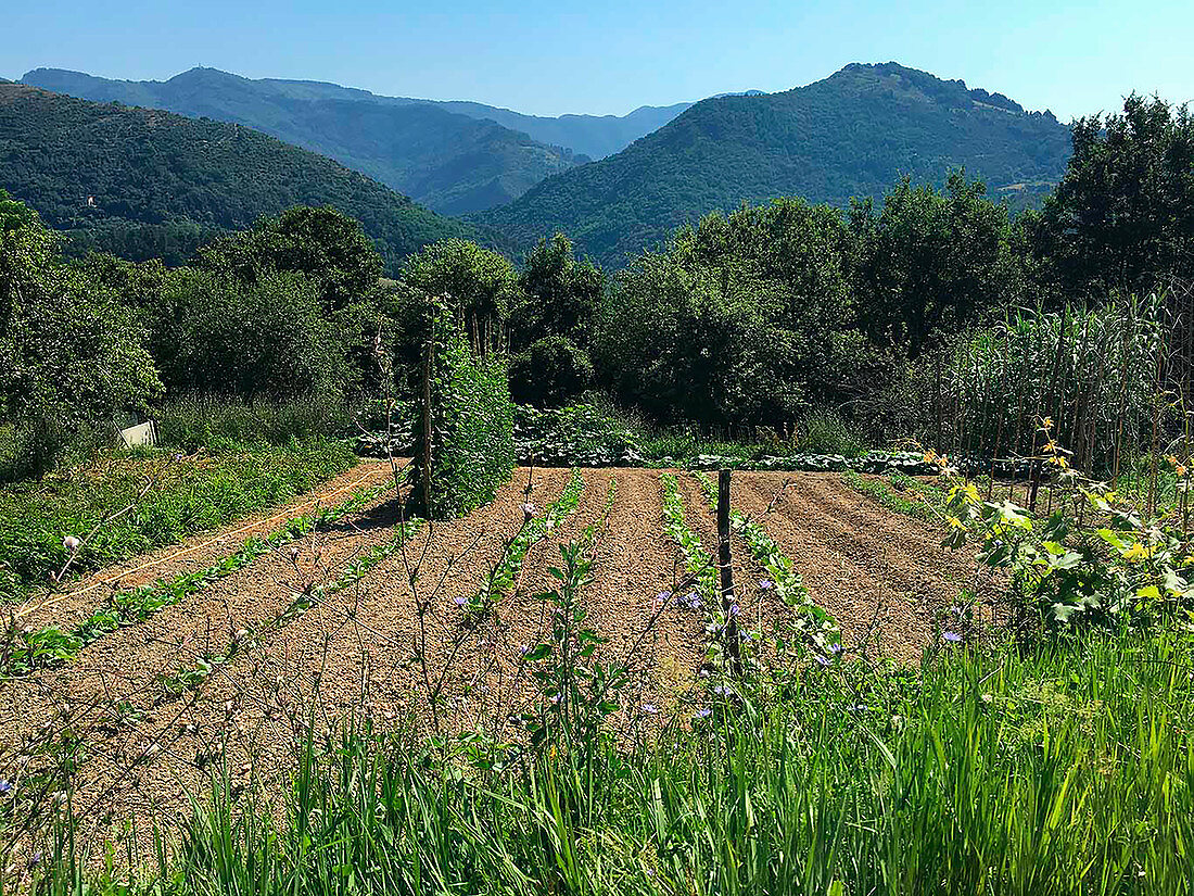 Vegetable patch in a rural area (Italy)