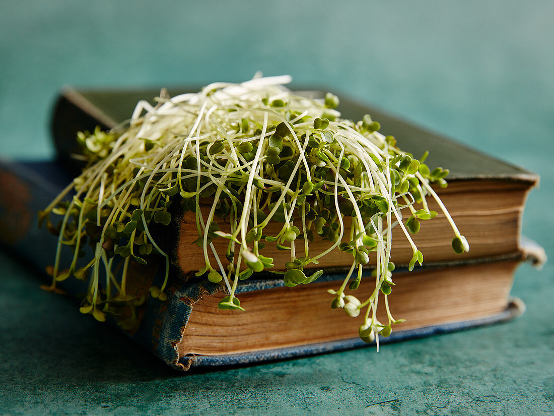 Cress lying on books