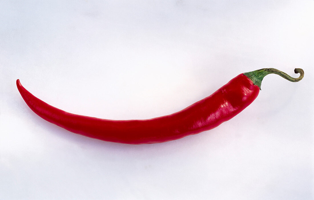 A red chilli