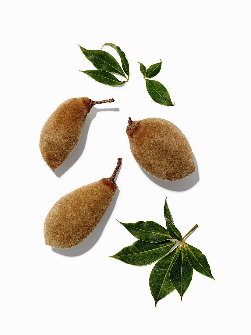 Baobab-Früchte mit Blättern auf weißem Untergrund