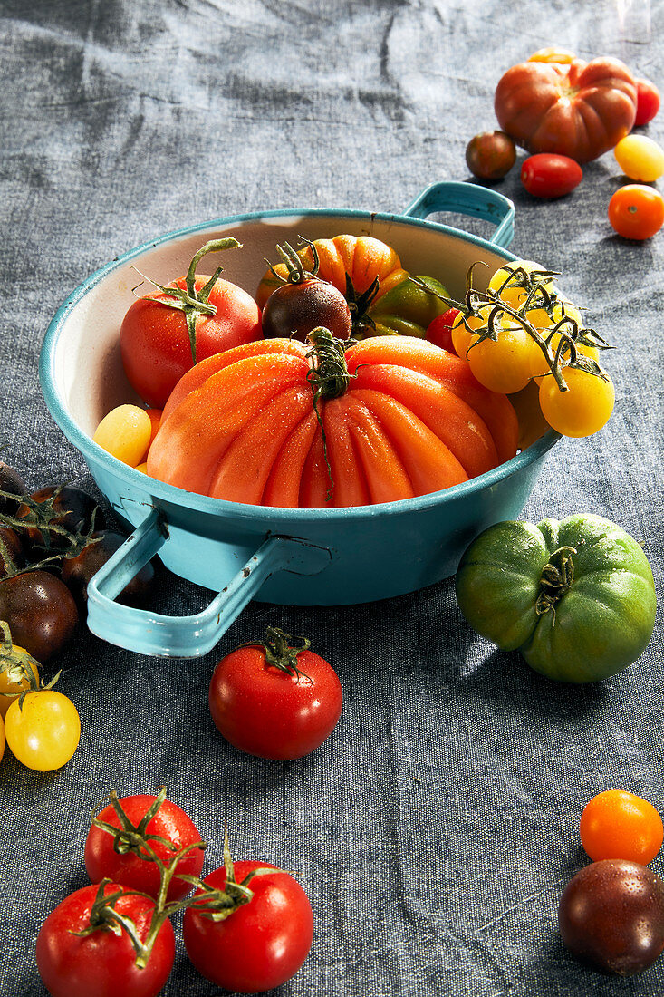 Various colourful tomatoes with an enamel colander on a tea towel