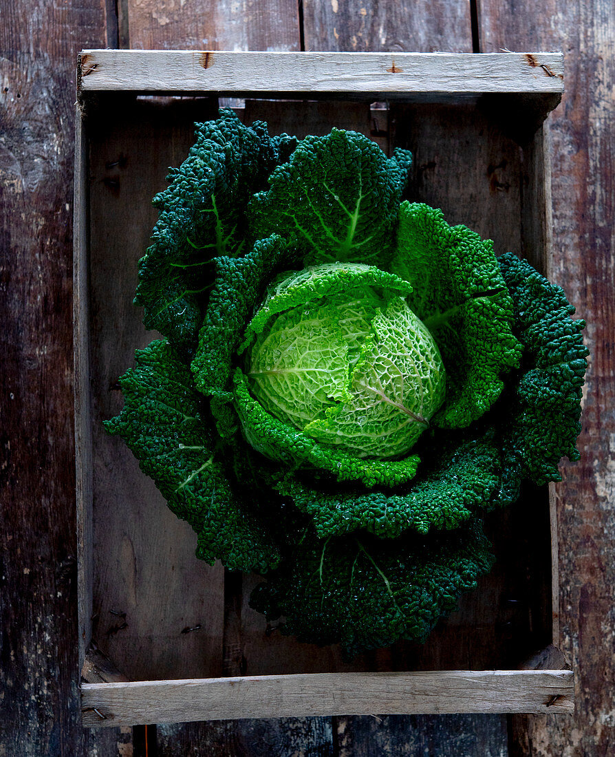 A savoy cabbage in a crate