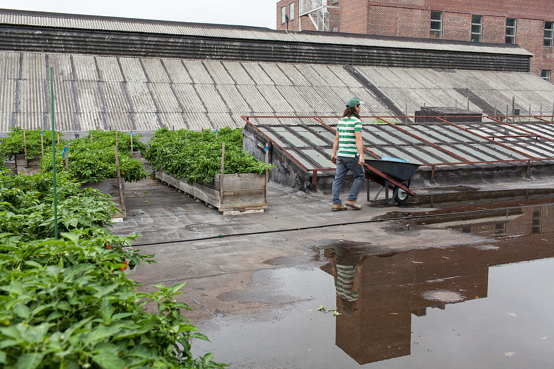 A rooftop farm on a former industrial site in Queens, NY