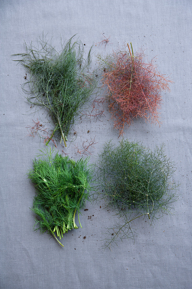 Fennel, bronze fennel, dill and fennel tips