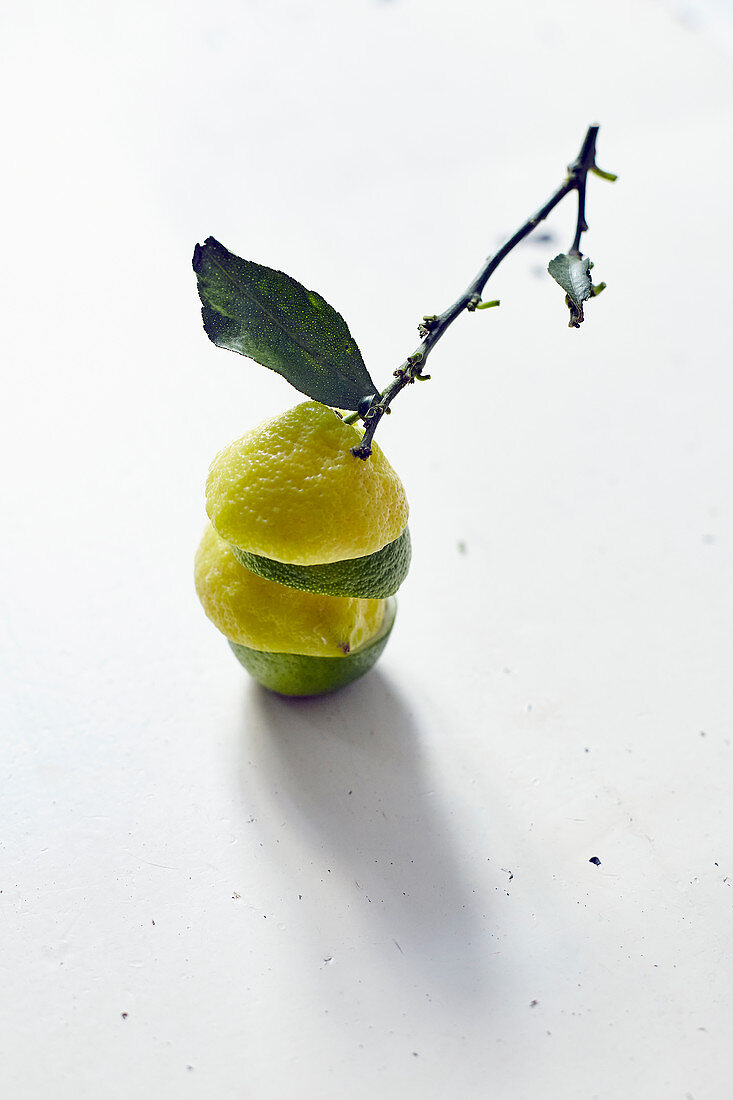 Stacked lemon and lime halves with a sprig