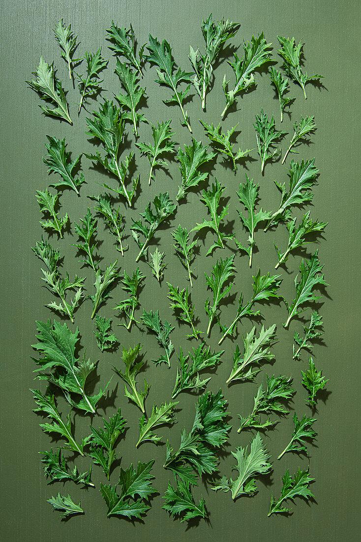 Japanese mizuna salad leaves