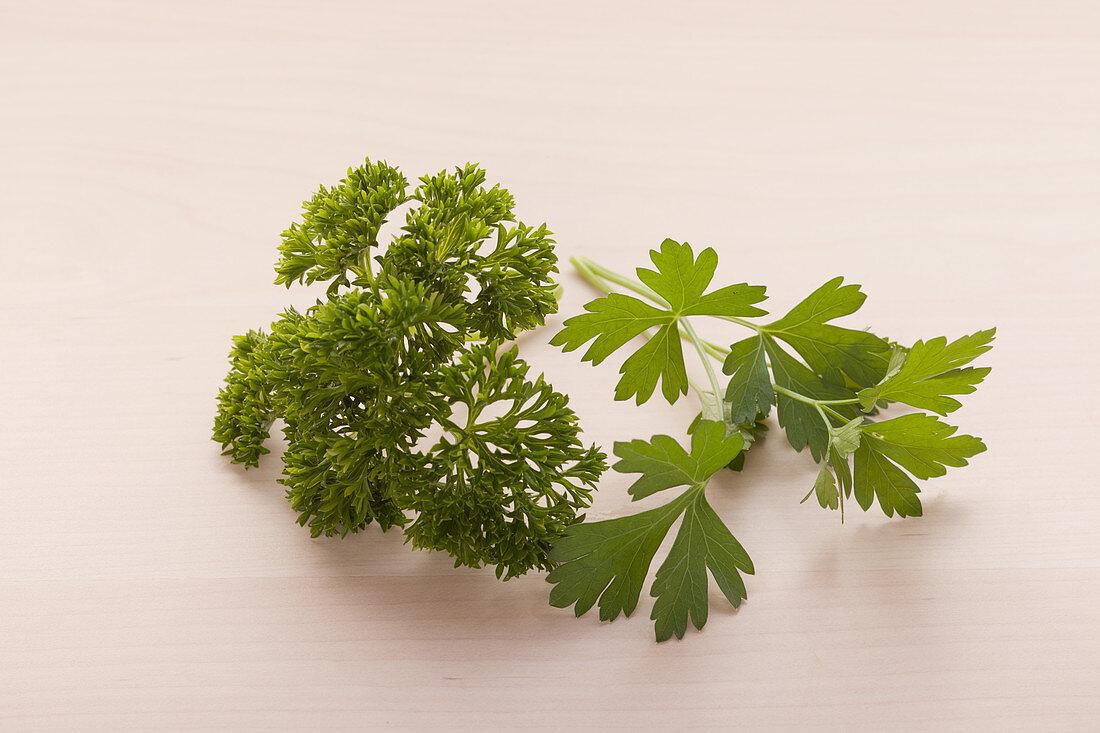 Flat leaf and curly leaf parsley