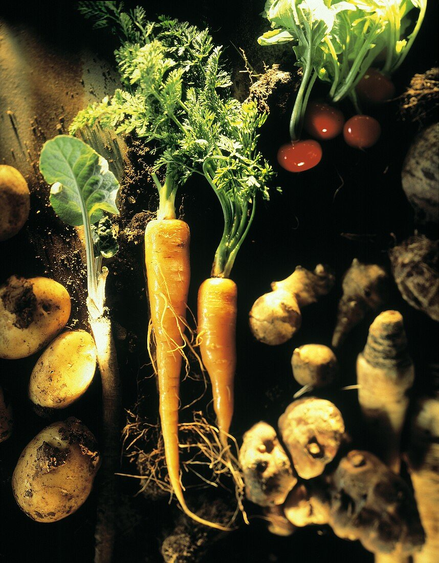 Still Life of Assorted Root Vegetables; Overhead