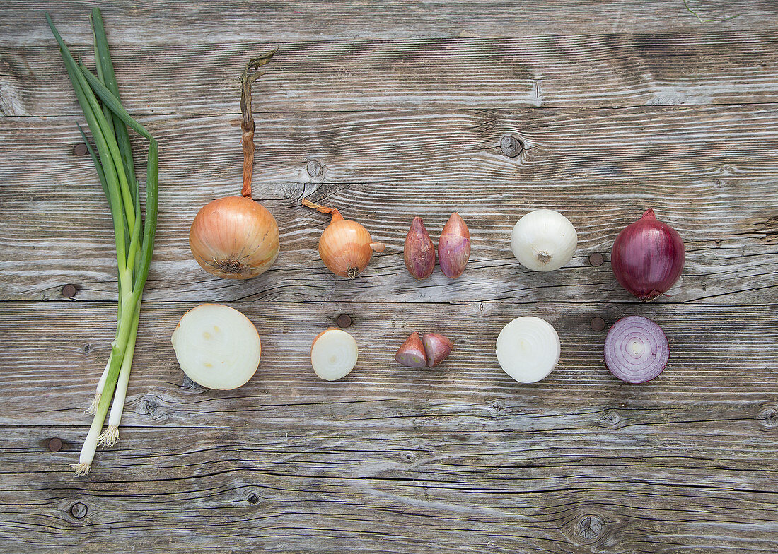 Vegetable onion, table onion, shallot, white and red onion, spring onion