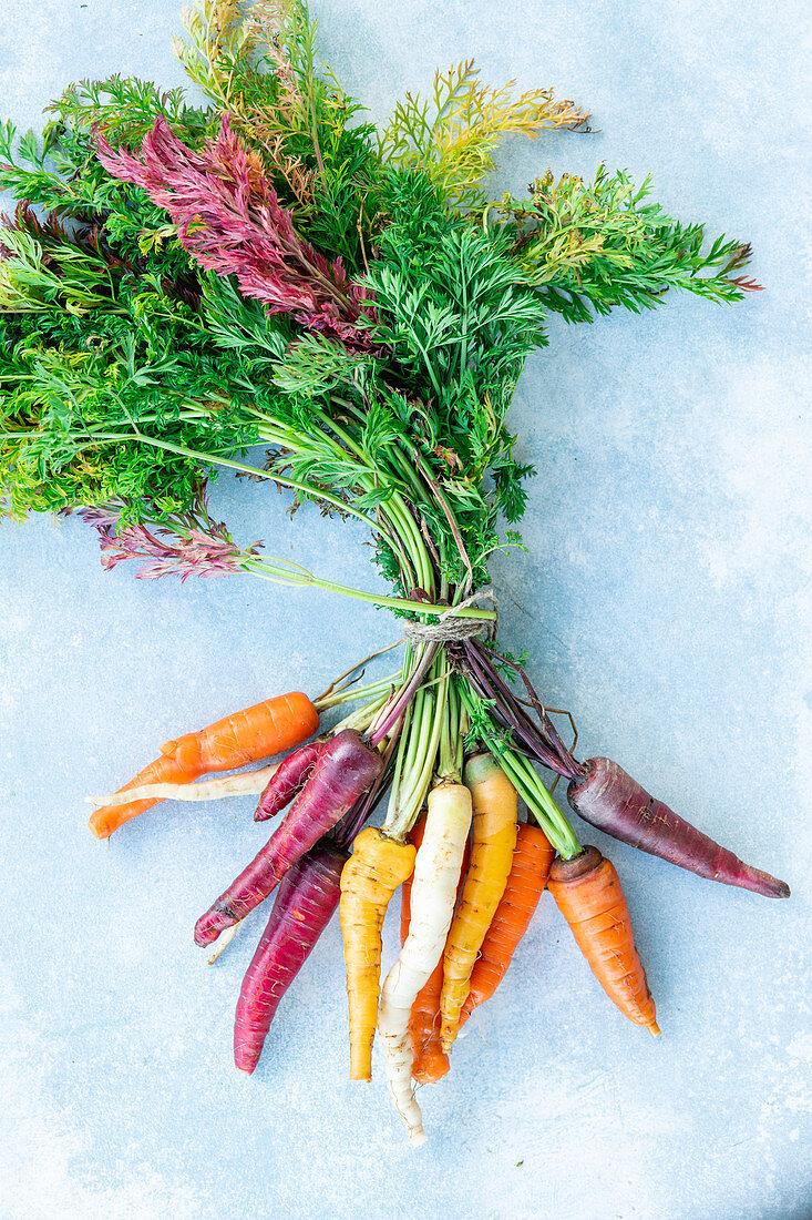 Bunte Karotten, gebündelt