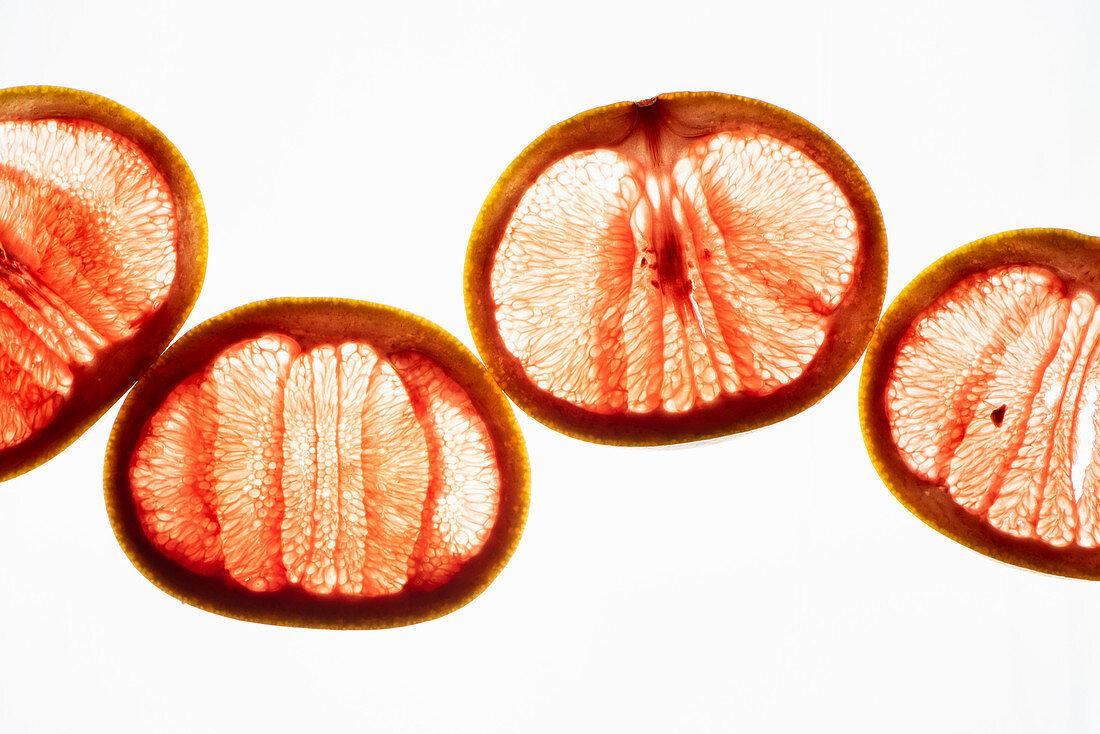 Transculent pink grapefruit slices